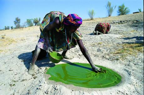 Tảo mặt trời Spirulina của Mỹ được coi là siêu thực phẩm xanh từ tự nhiên