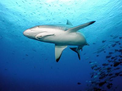 Sụn Vi Cá Mập GNC Shark Cartilage 750mg Của Mỹ