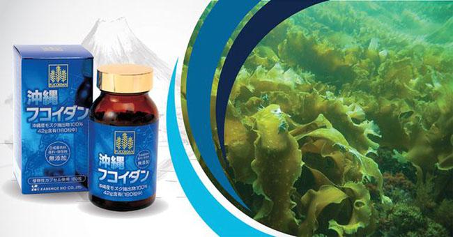 Fucoidan Okinawa: Đánh Giá Tổng Hợp Về Fucoidan Okinawa Hỗ Trợ Điều Trị Ung Thư