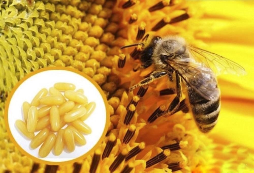 Thưa Chuyên Gia: Sữa Ong Chúa Có Công Dụng Gì? Tôi Nên Dùng Loại Nào?